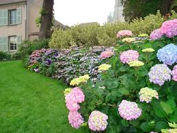 beautiful garden with flowers