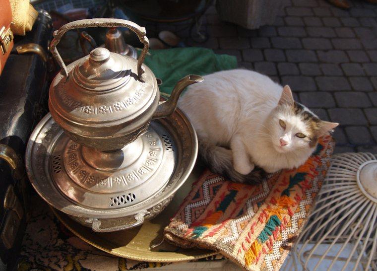 Giordania | Un gatto accanto a una teiera