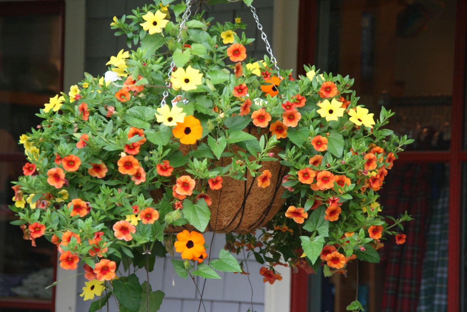 袁曉輝 Rita : 吊盆植物
