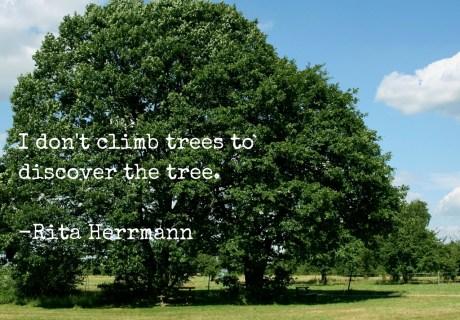 trees tree genealogy family discover