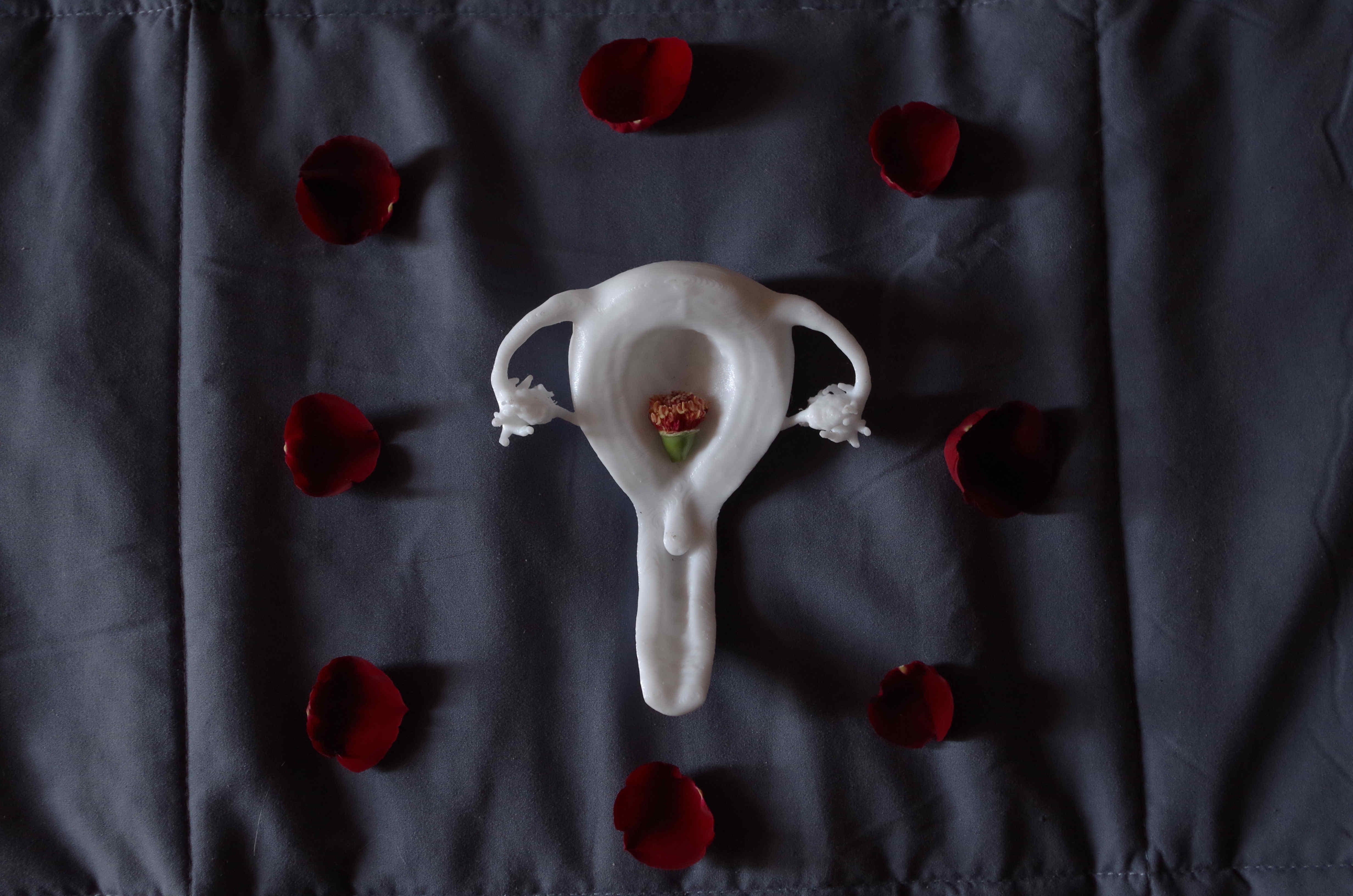 Uterus blanc imprimé en 3D avec le coeur d'une rose entouré de pétales rouges