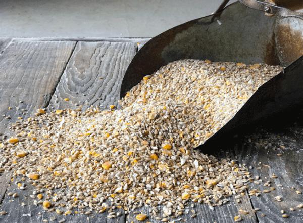 Non-GMO Cow and Calf Feed