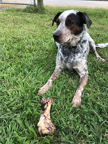 Non-GMO Dog Bones