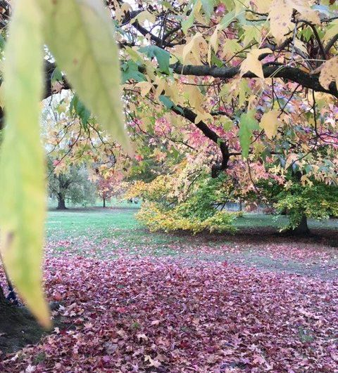 Autumn leaves, Hampstead Heath