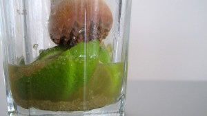 Limetten werden mit Rohrzucker im Glas leicht gequetscht