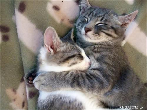 Abbracci A Letto