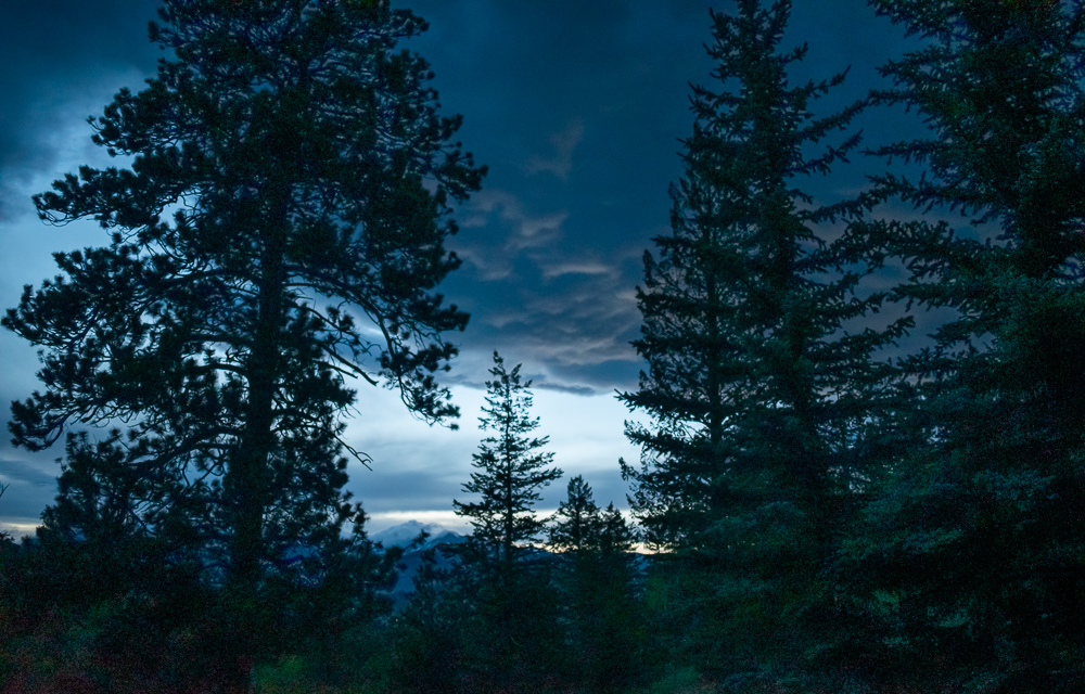 Night Clouds Through Rocky Mountain Firs