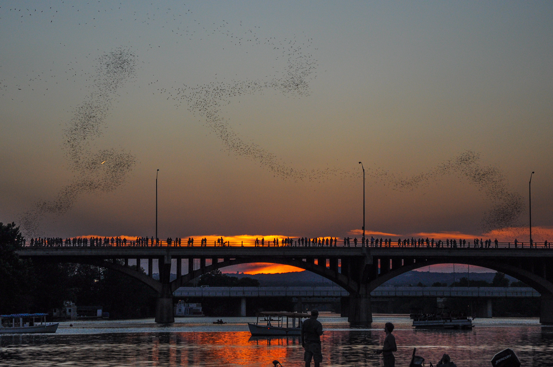 Austin Texas Bats Congress Bridge Halloween