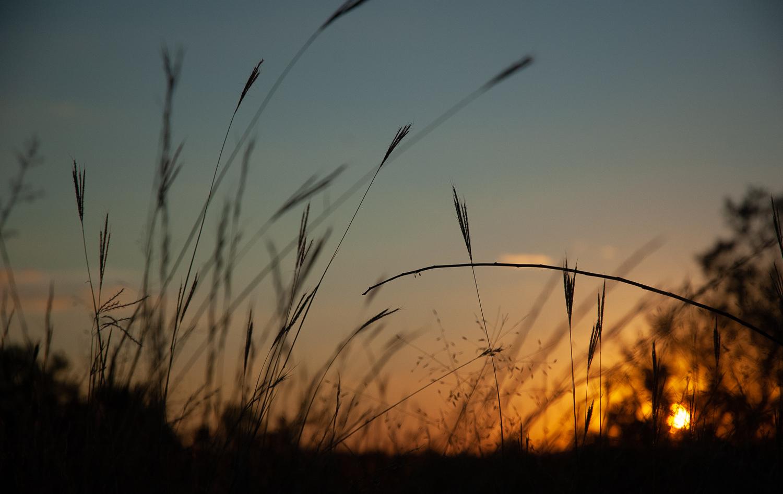 Wheat Sunsets Fall Halloween Thanksgiving Autumn