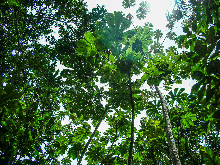 Guyana, Jungle Leaves In The Sun