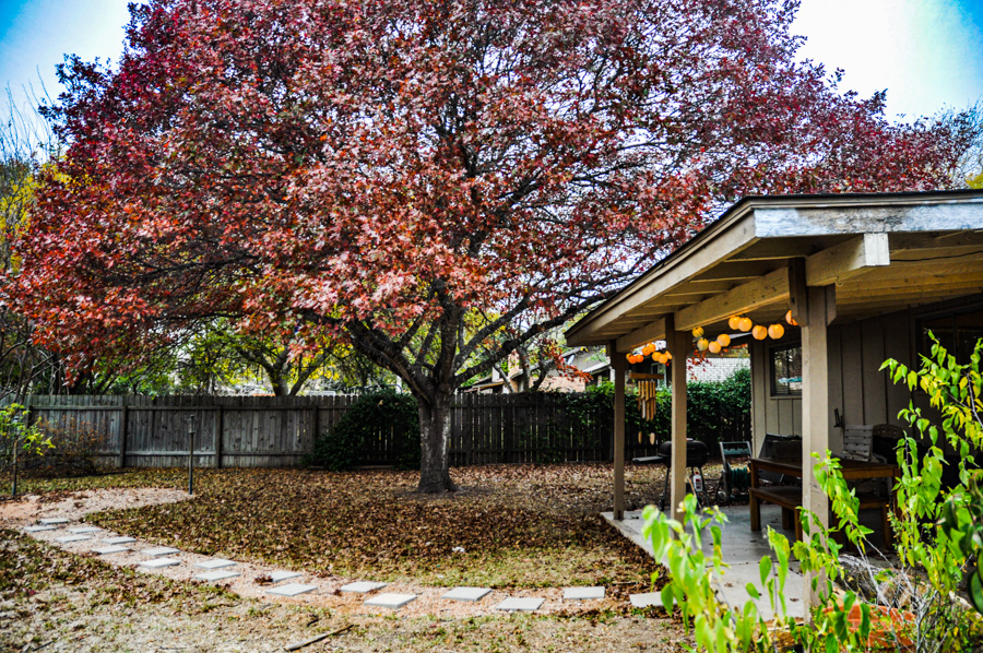 Backyard, Red Oak, Covered Patio