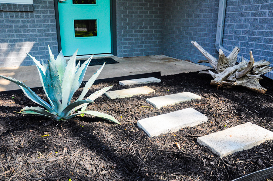 Landscaping, Yucca Plant, Drift-wood
