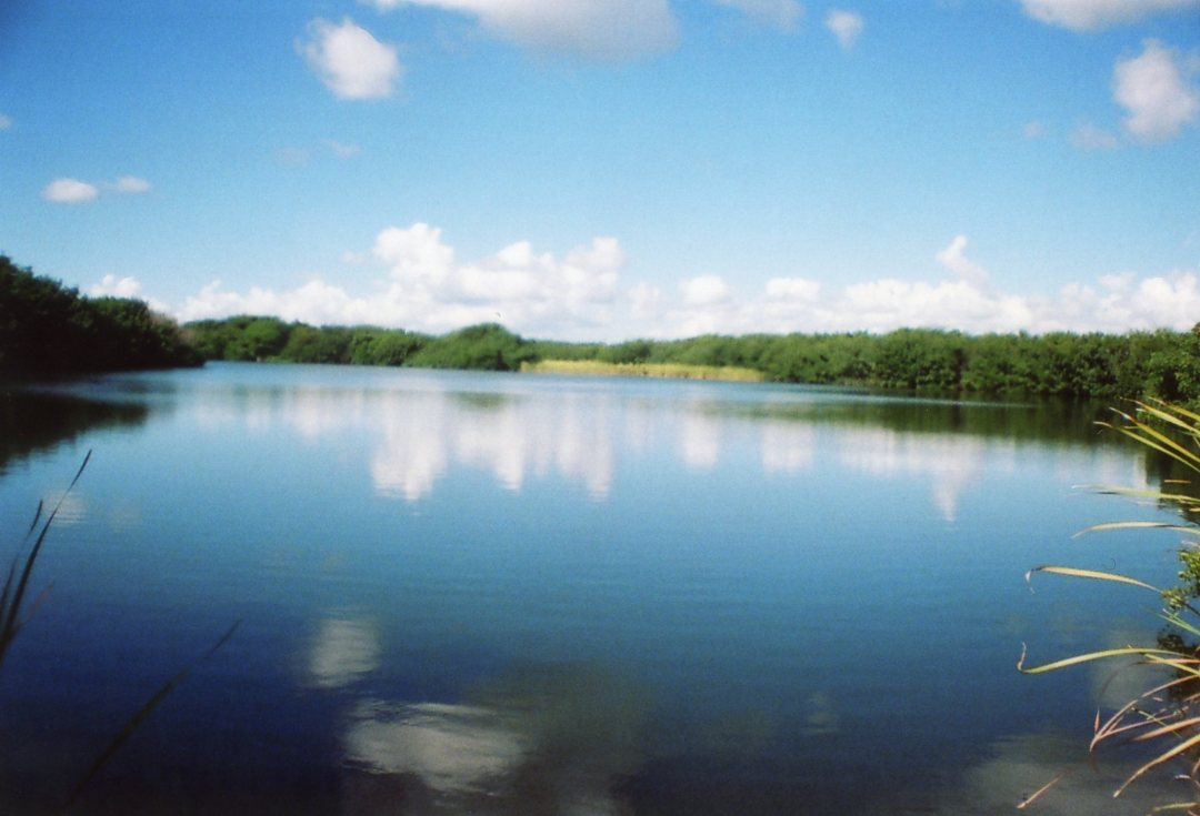 Floride everglades