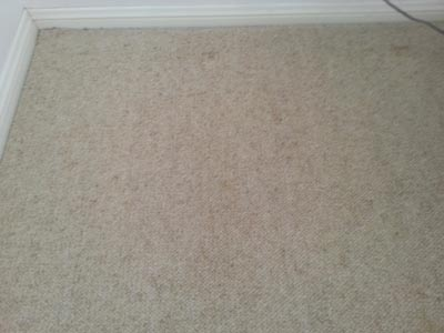 Removing furniture indents in carpets.