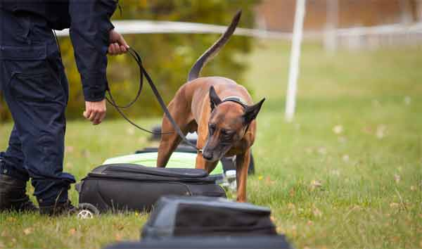 How actually the ultrasonic dog trainer works