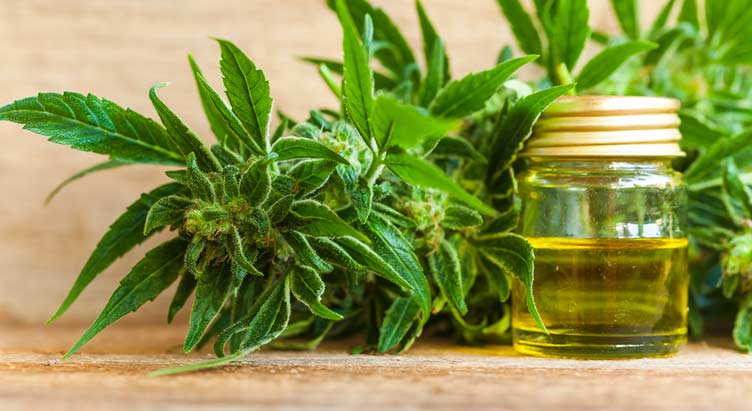 Steps to Make CBD Oil at Home