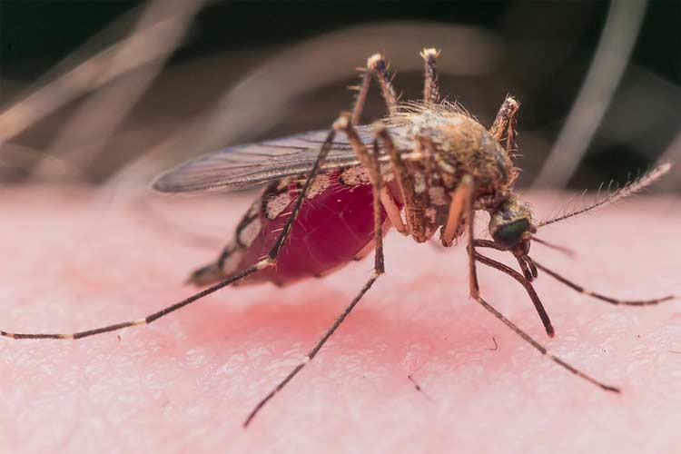 When is Mosquito Season Over?