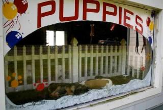 2011_0608_puppies_2