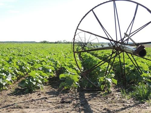 2013 0615 farm stand schmitt field