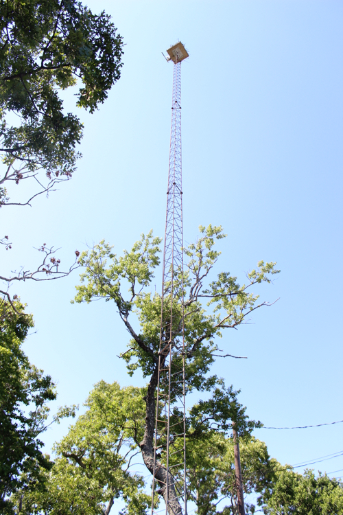The 80-foot-tall radio tower outside Aprea's house was previously used to communicate with commercial fishing boats. Photo: Katie Blasl
