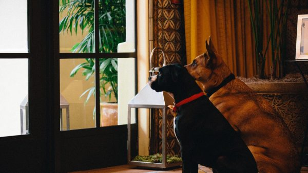 Pet Friendly Places In Portland Texas Accepting Dogs - Year