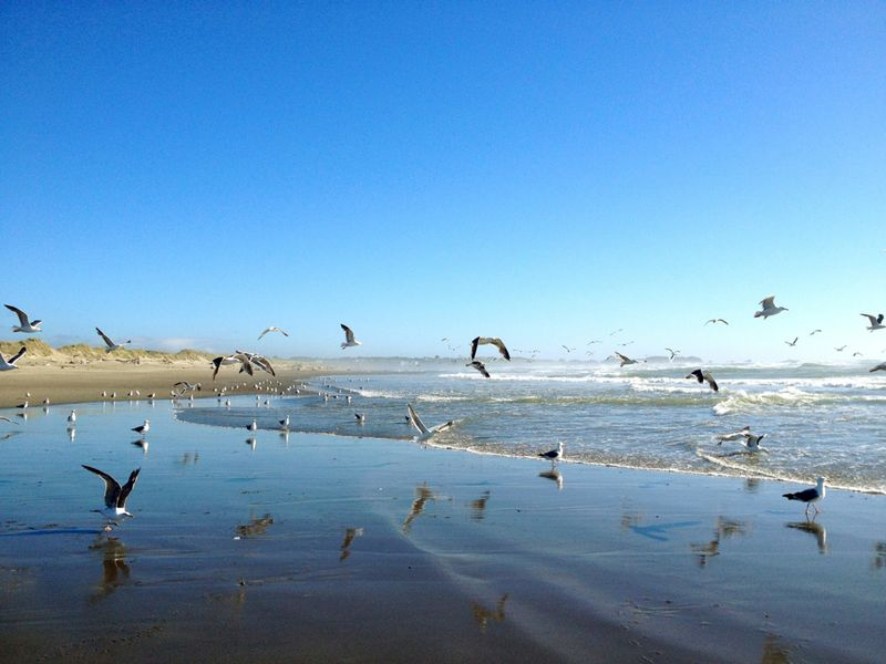 Bullards Beach State Park - 7