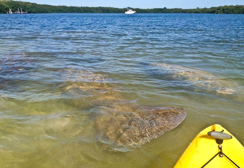 Kayaking_curryhammock-3