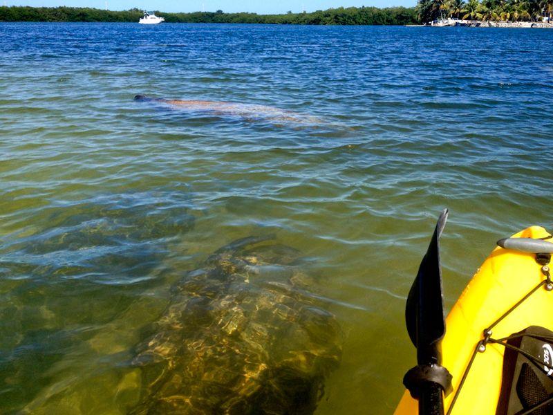 Kayaking_curryhammock-9