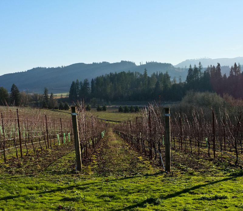 Oregon_wine-2