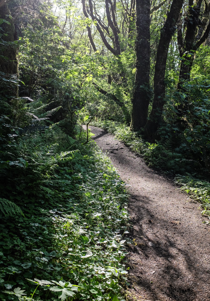 Greatspruce_hike-11