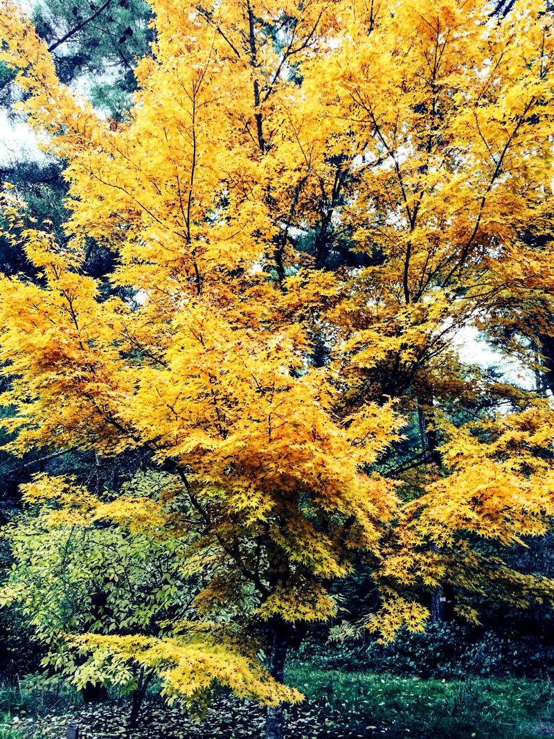 Arboretum_fall-3