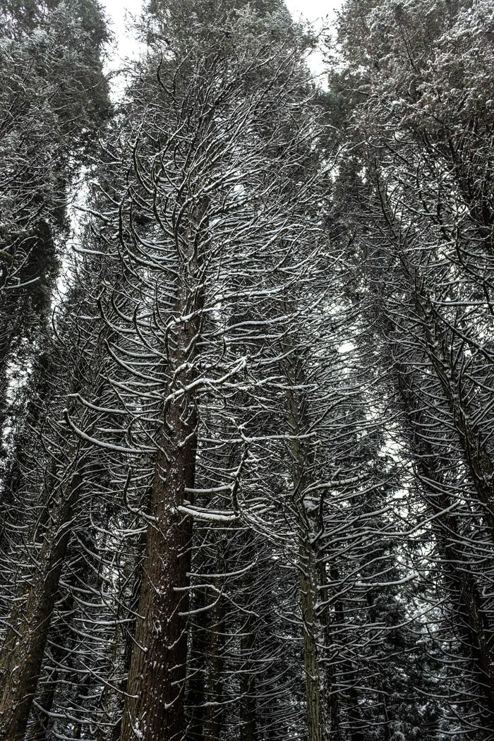 Snowyhike-4927