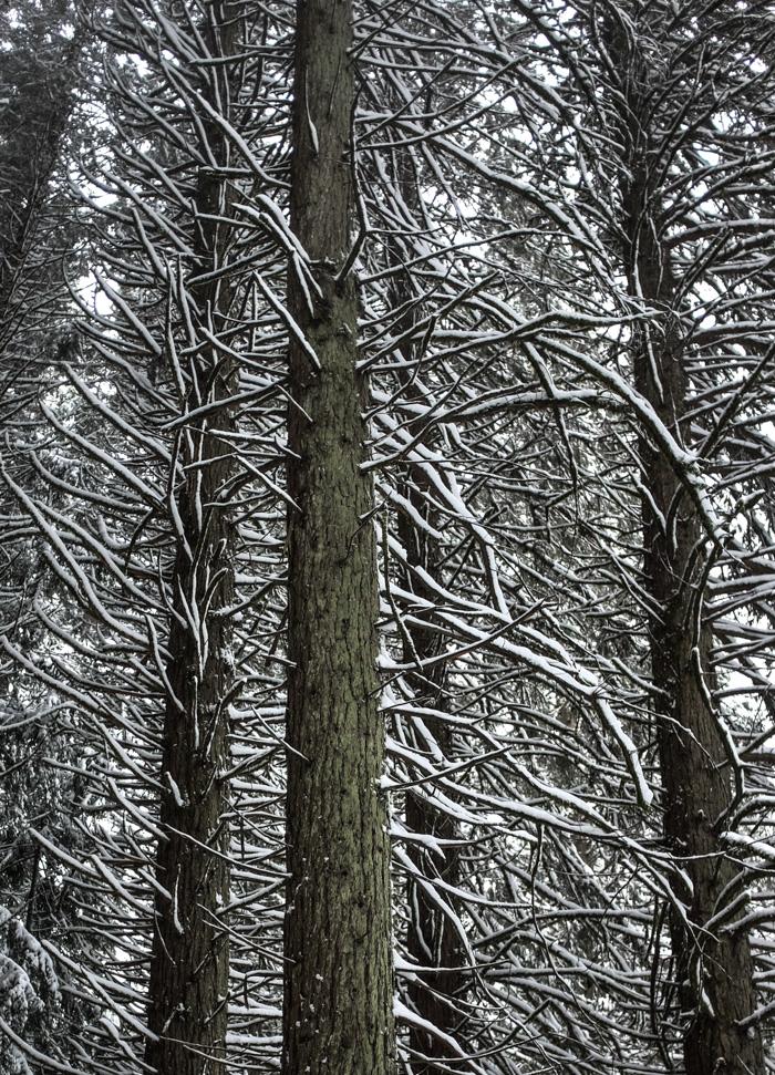 Snowday2-4938