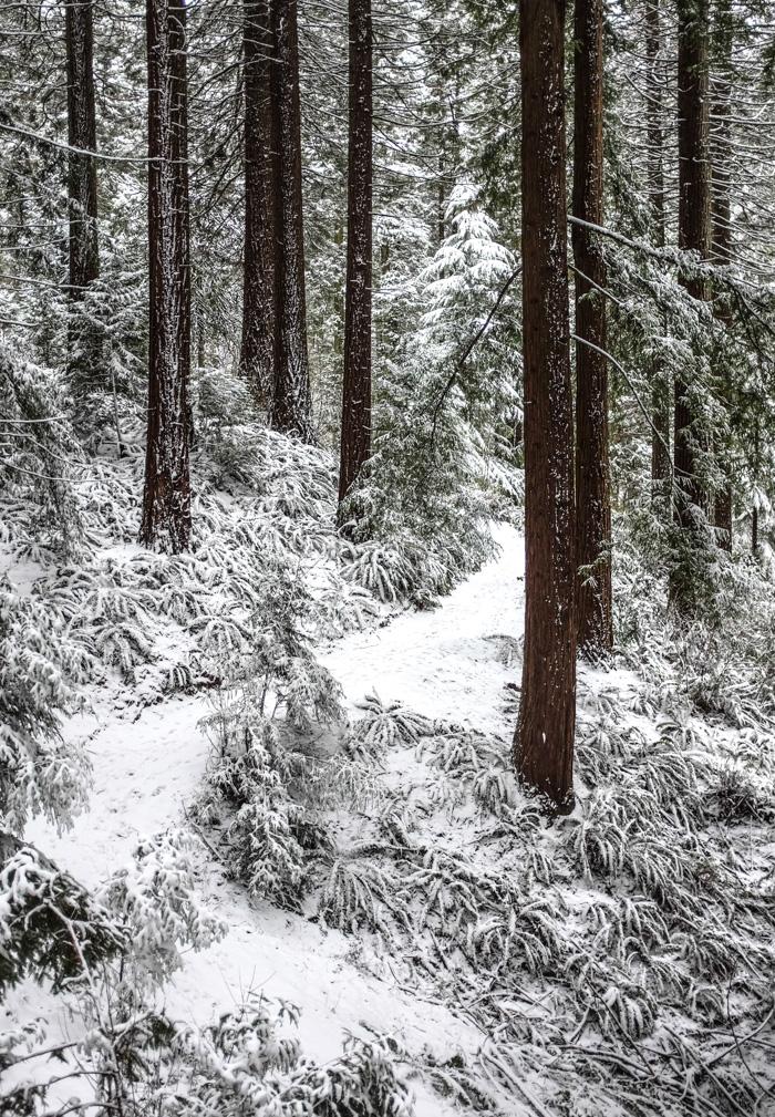 Snowyhike-4926