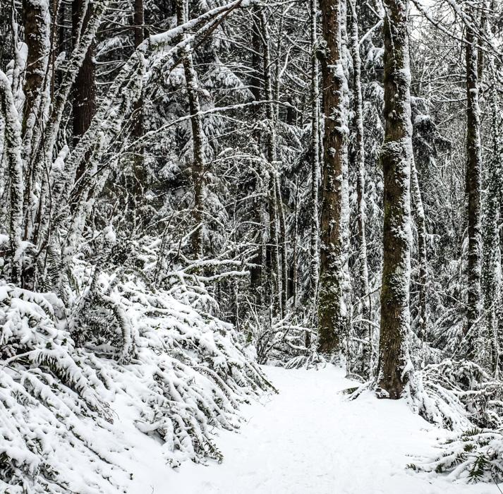 Snowyhike_same-4925