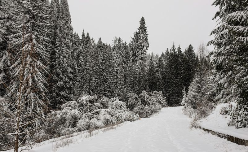 Snowday2-4935
