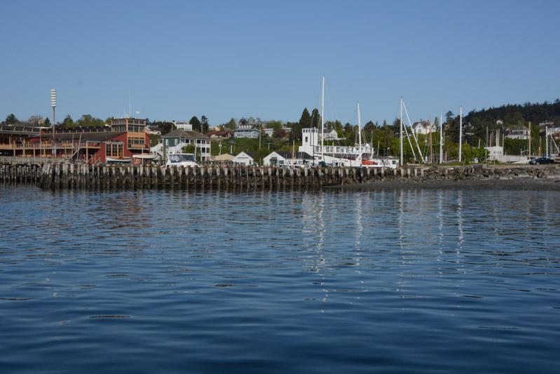 PT_Stuart_orcas-0686