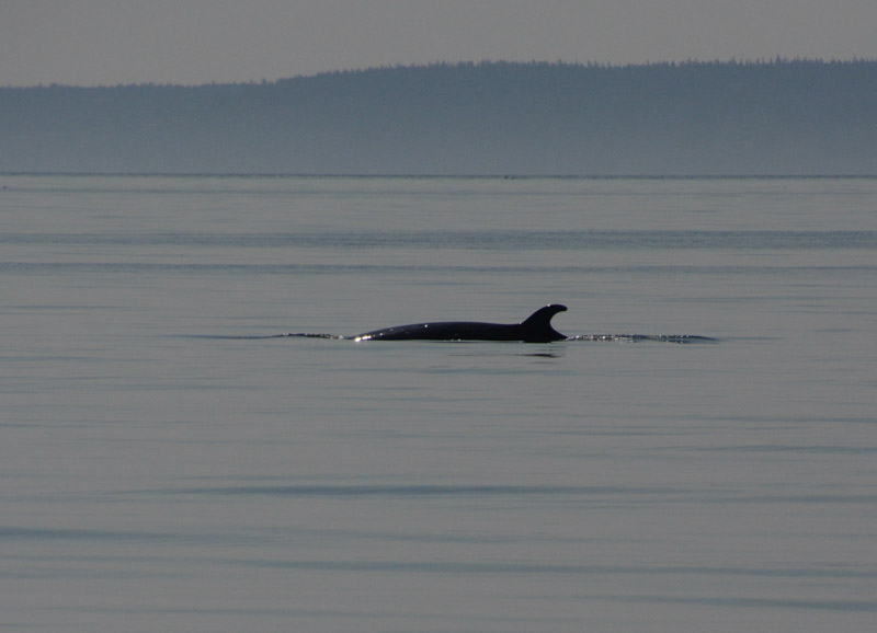 PT_Stuart_orcas-0758