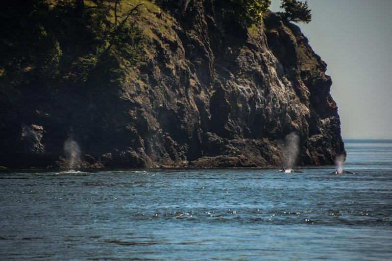 PT_Stuart_orcas-0909