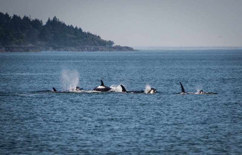 PT_Stuart_orcas-1223