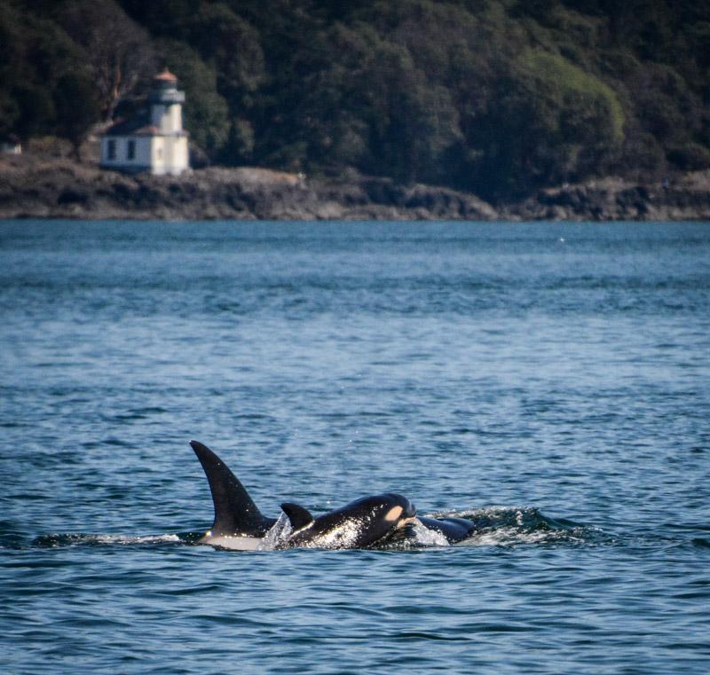 PT_Stuart_orcas-1439