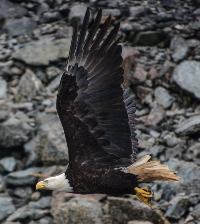 Eagles-3881