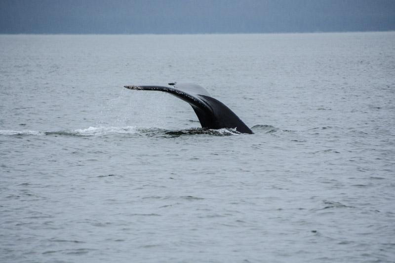 Humpbacks-5548