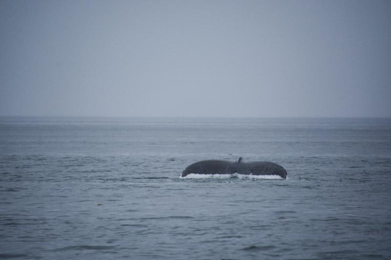 Humpbacks-5838