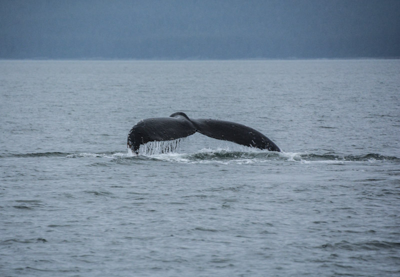 Humpbacks-5523