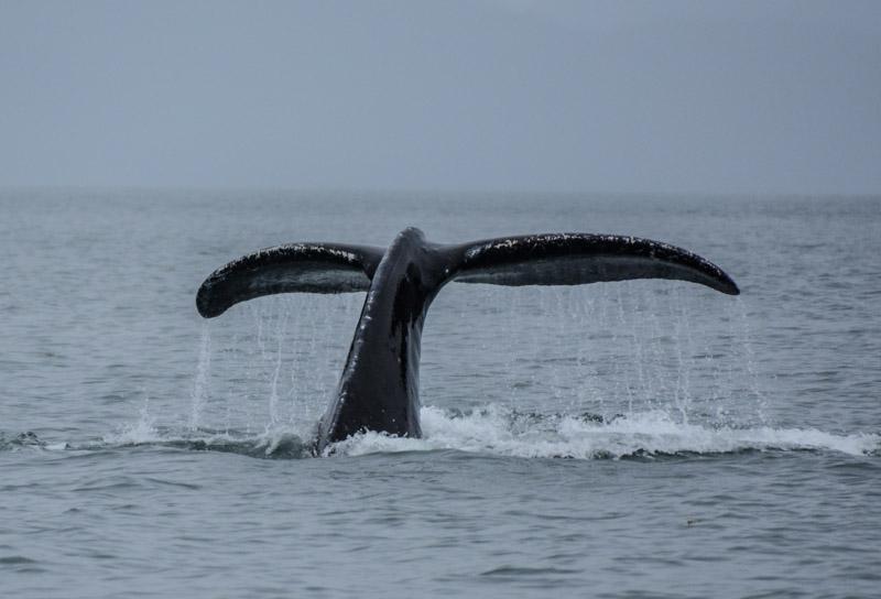 Humpbacks-5682