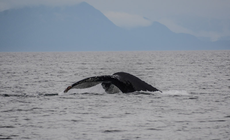 Humpbacks-6882