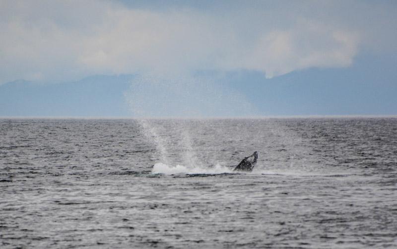 Humpbacks-6940