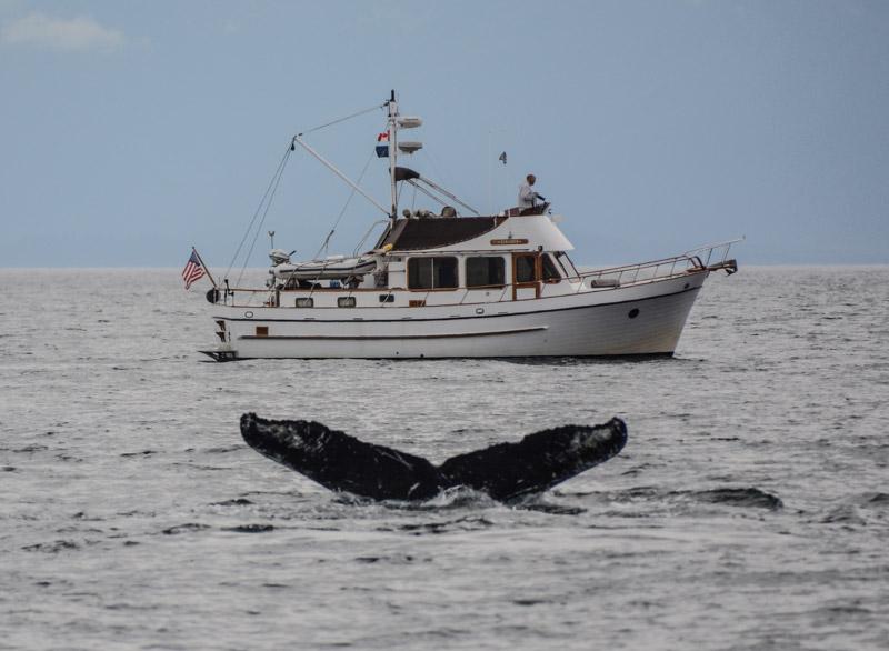 Humpbacks-6988