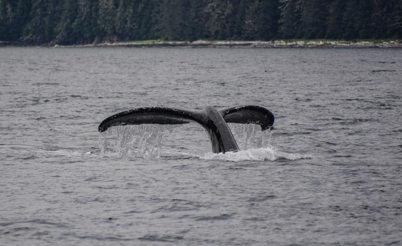 Humpbacks-7007